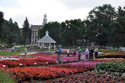 Colorado State University Flower Trials with ''Best Dahlia'' XXL Veracruz